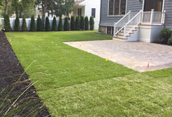lawn installation and maintenance