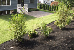 make your backyard look finished with professional landscaping